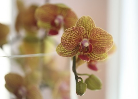 New Orchid Blooms