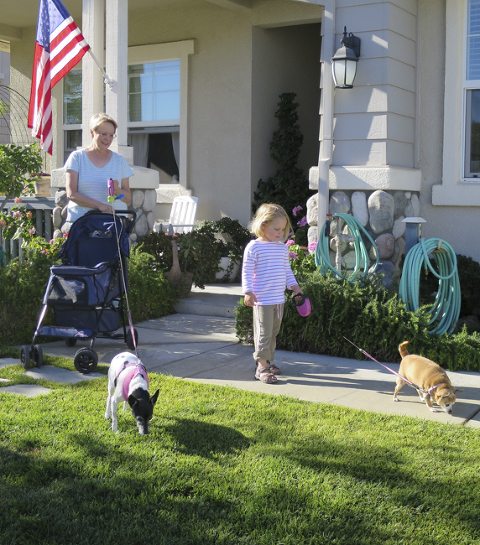 Walking the dogs with grandma